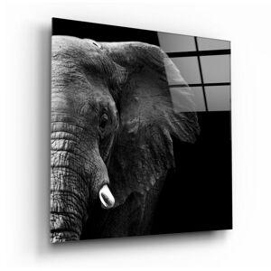 Skleněný obraz Insigne Elephant,100 x100cm